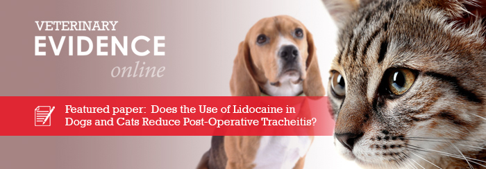 Does the Use of Lidocaine in Dogs and Cats Reduce Post-Operative Tracheitis