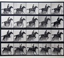 Eadward Muybridge animal locomotion