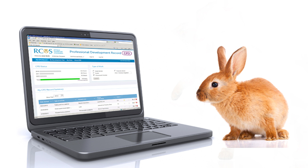 Bunny with CPD display on laptop