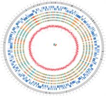 Genome of Wolbachia pipientis