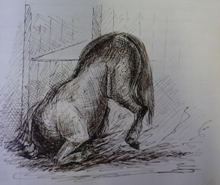 Roalfe Cox illustration of the horse pitching forward