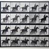 Eadward Muybridge animal locomotion