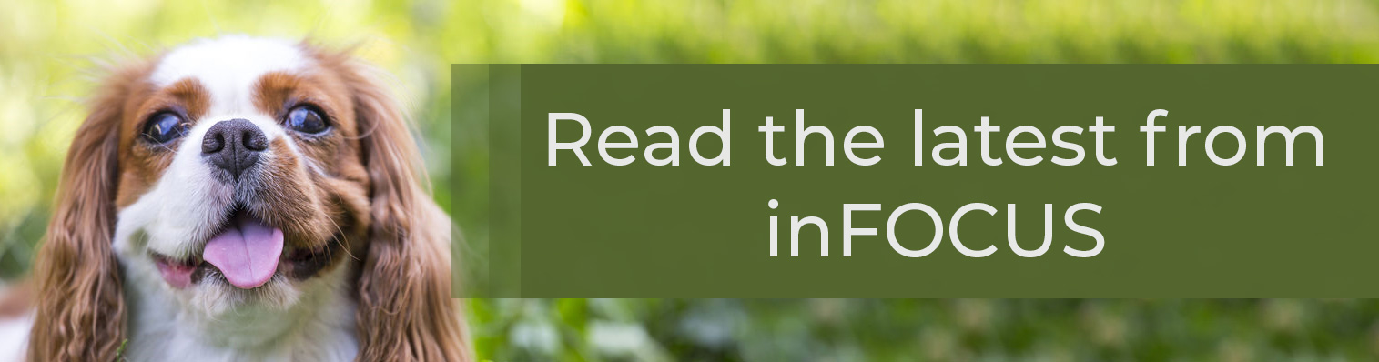"""spaniel in grass. Text: """"Read the latest from inFOCUS"""""""