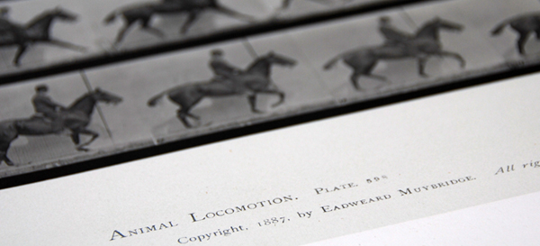 A page from 'Animal Locomotion' by Eadweard Muybridge